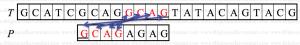 reverse_factoring_algo9